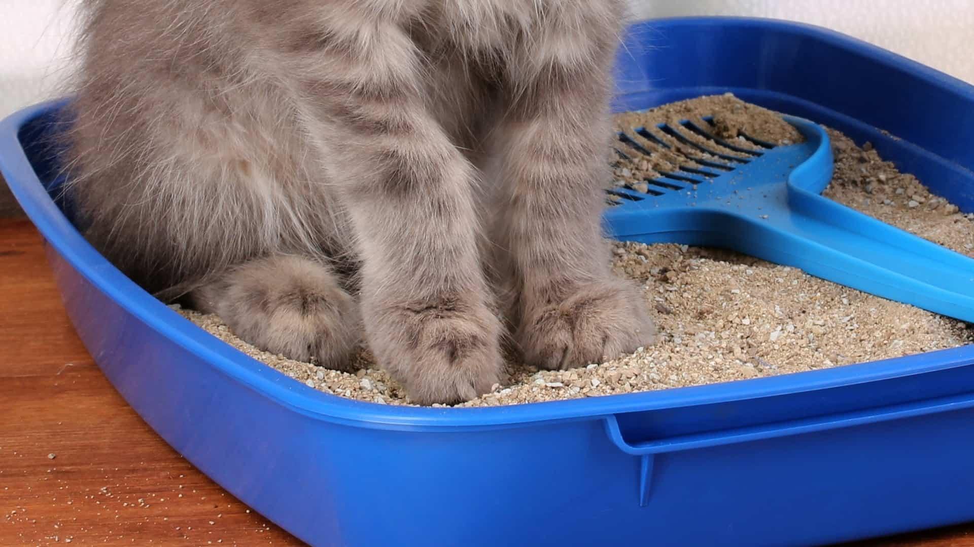 eliminar el mal olor a orina de gato