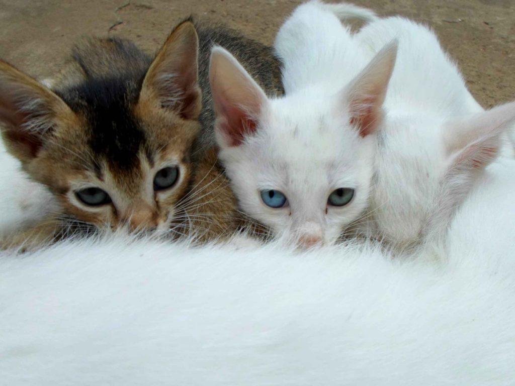destete-de-los-gatos